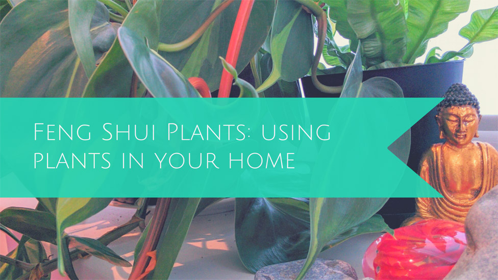 Feng Shui & Plants: The benefits of using plants in your home