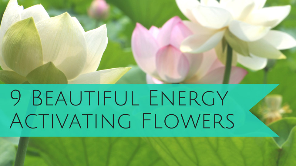 Flower Power: Nine Flowers to Activate the Energy in Your Home