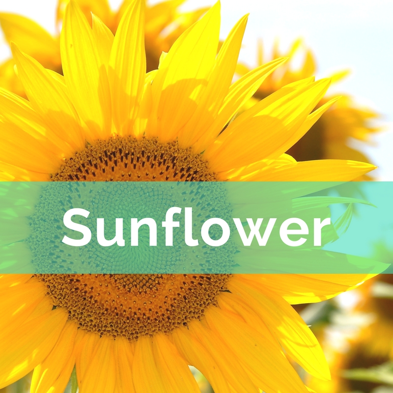Flower Power Nine Flowers To Activate The Energy In Your Home